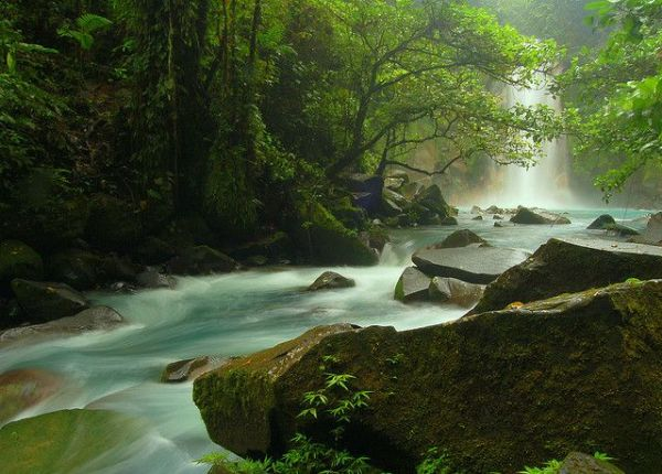 Der Regenwald Costa Ricas