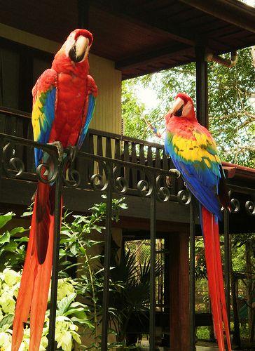 Birdwatching Vögel sehen in Costa Rica