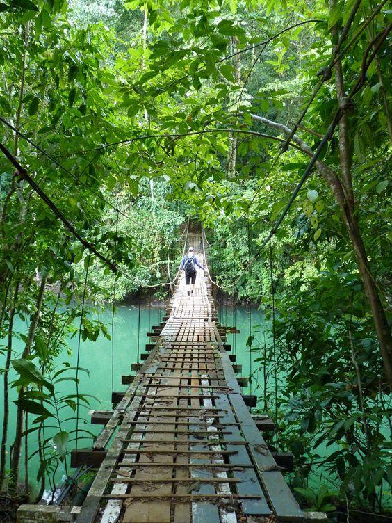 Brücke im Urwald