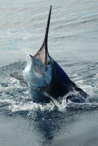 Fischen in Costa Rica