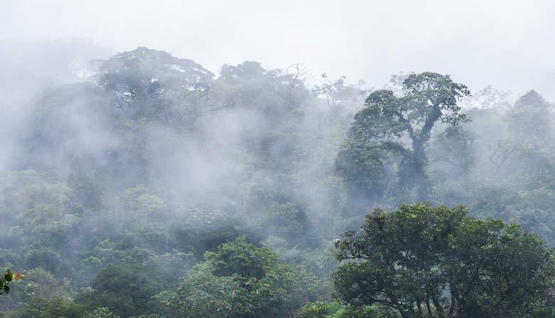 Tropen Wälder Costa Rica