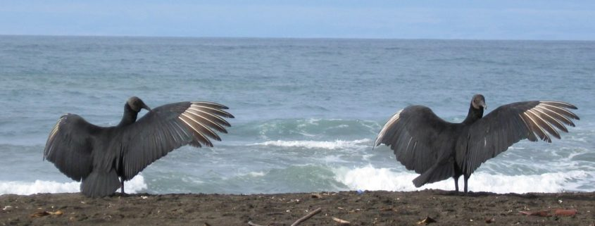 Gruppenreise Costa Rica 1