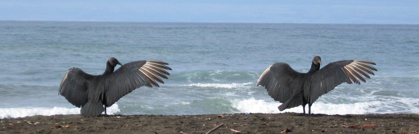 Gemeinsam durch Costa Rica reisen? 9 Wichtige Fragen!