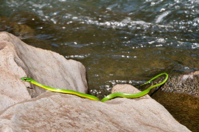 Schlangen in Costa Rica