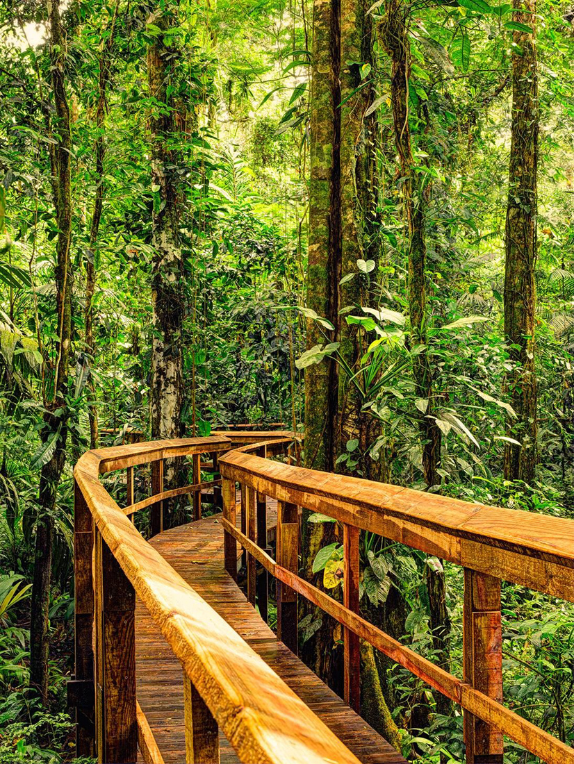 """Rainforest Boardwalk"" bei Cinco Ceibas 