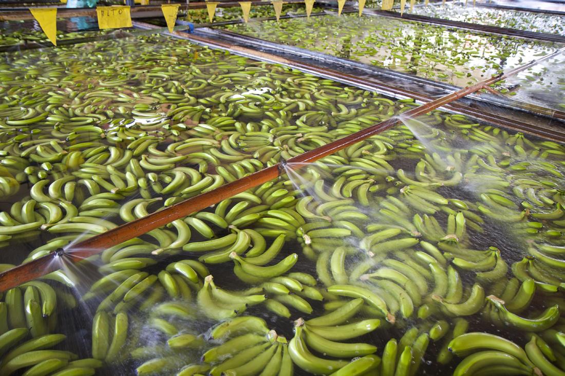Besuch einer Bananenplantage in Costa Rica
