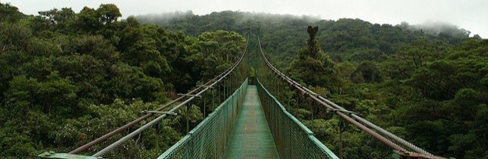Monteverde: Die Nebelwälder Costa Rica's