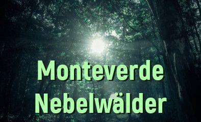 Monteverde Nebelwälder Costa Rica