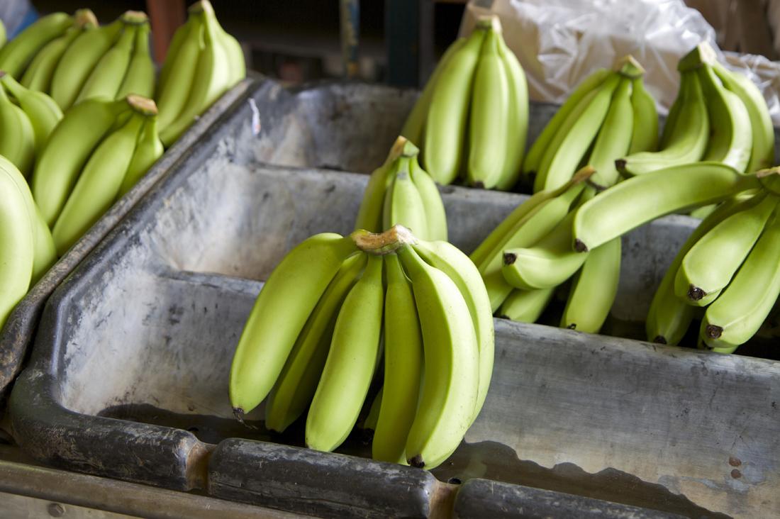 Bananenplantage, Costa Rica (Foto: Marc Tschallener)