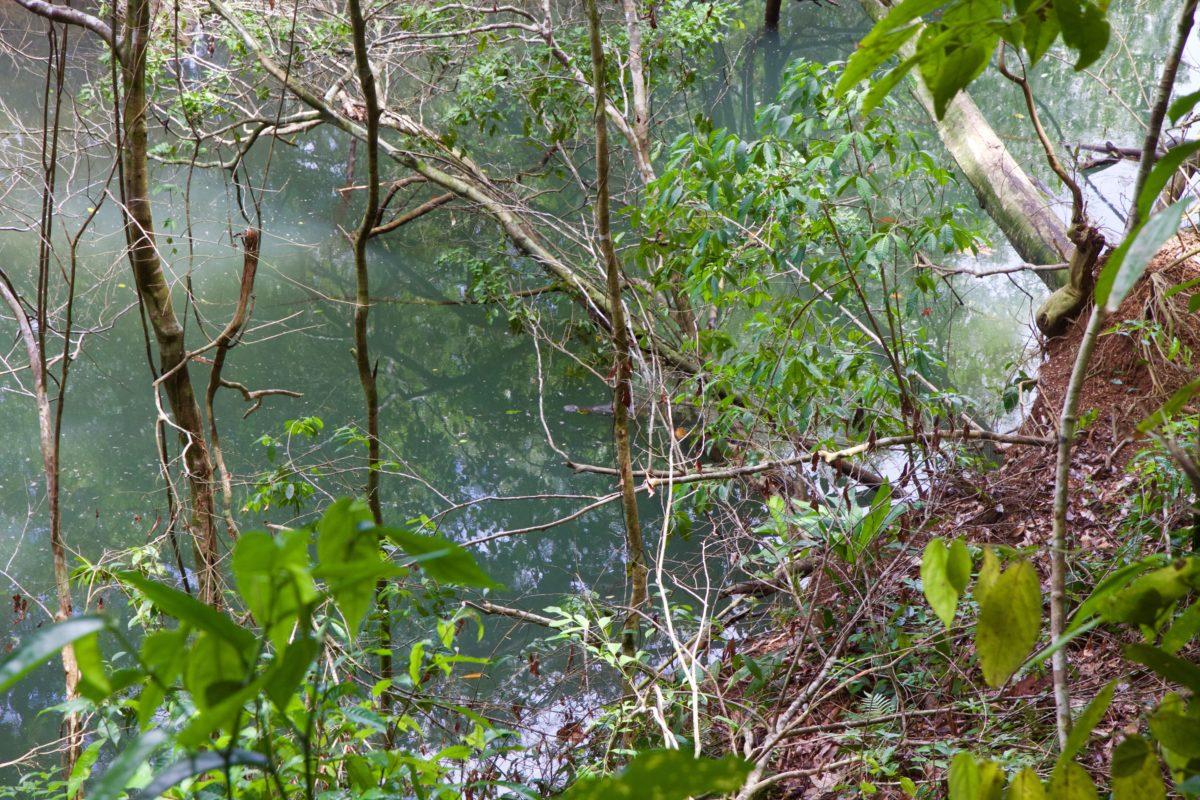 Corcovado Nationalpark, Krokodil getarnt