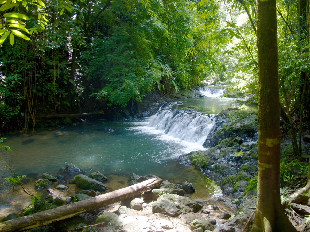 Corcovado Nationalpark, Costa Rica