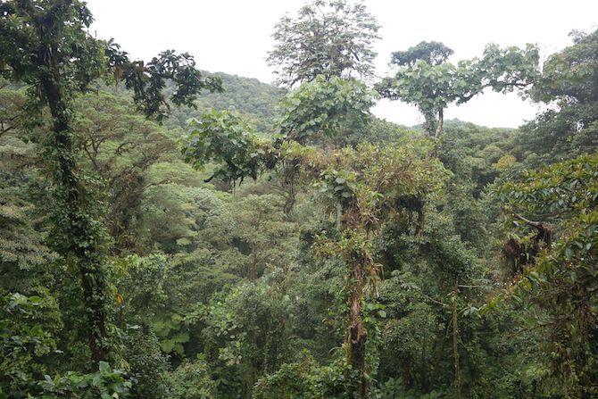 Costa Rica Bericht - Natur
