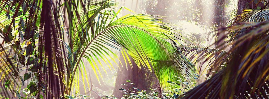 Dominical, Costa Rica – Highlights, Anreise und Tipps