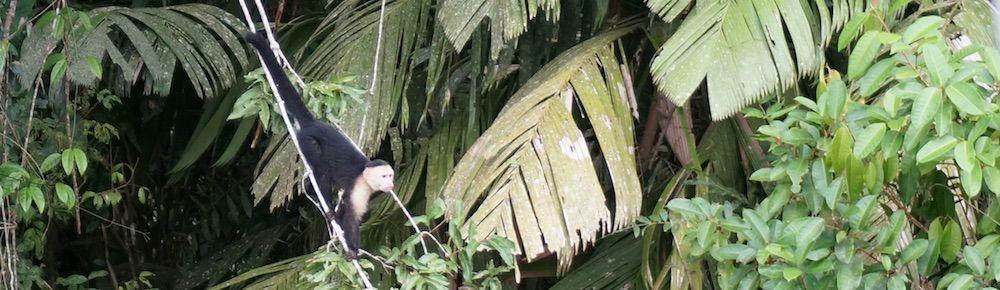 Osa Peninsula, Costa Rica – Highlights, Orte und Tipps